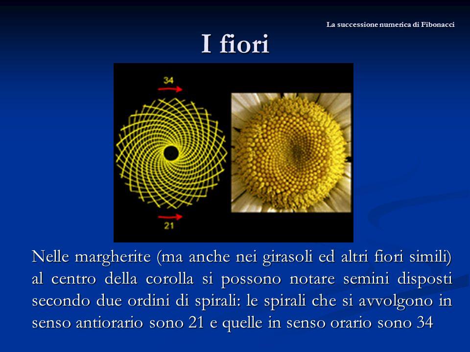 I fiori Nelle margherite (ma anche nei girasoli ed altri fiori simili) al centro della corolla si possono notare semini disposti secondo due ordini di