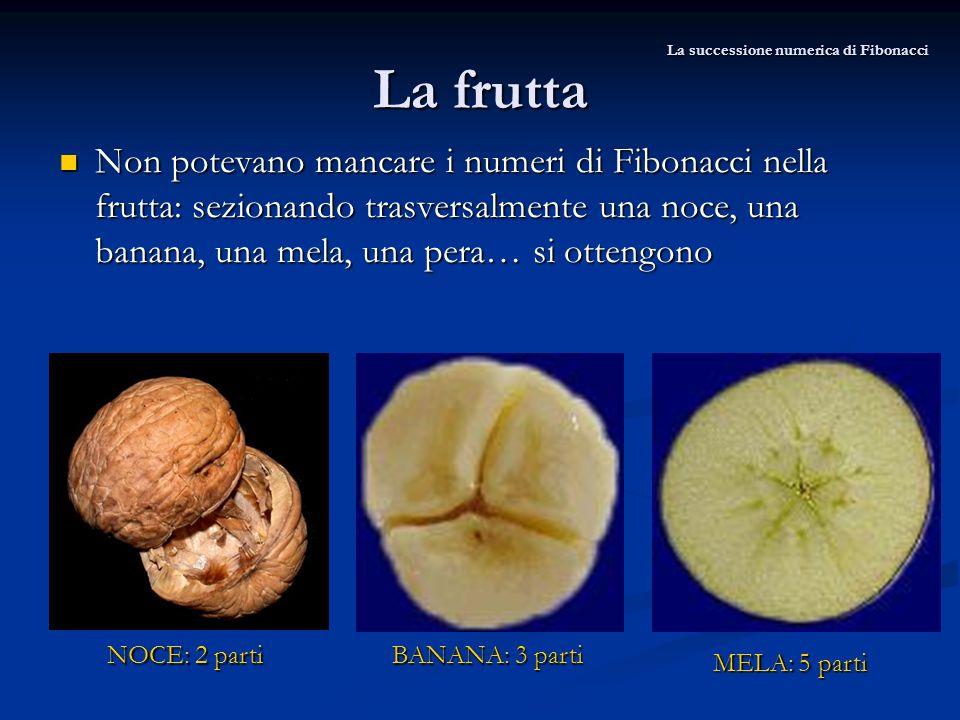 La frutta Non potevano mancare i numeri di Fibonacci nella frutta: sezionando trasversalmente una noce, una banana, una mela, una pera… si ottengono N