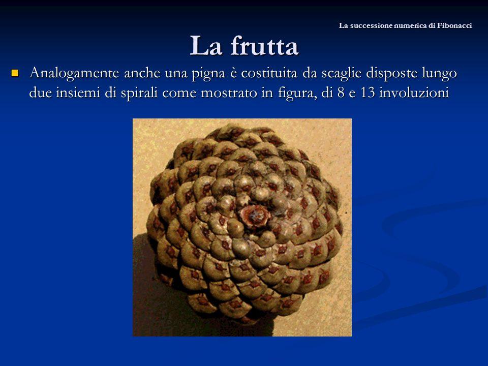 La frutta Analogamente anche una pigna è costituita da scaglie disposte lungo due insiemi di spirali come mostrato in figura, di 8 e 13 involuzioni An