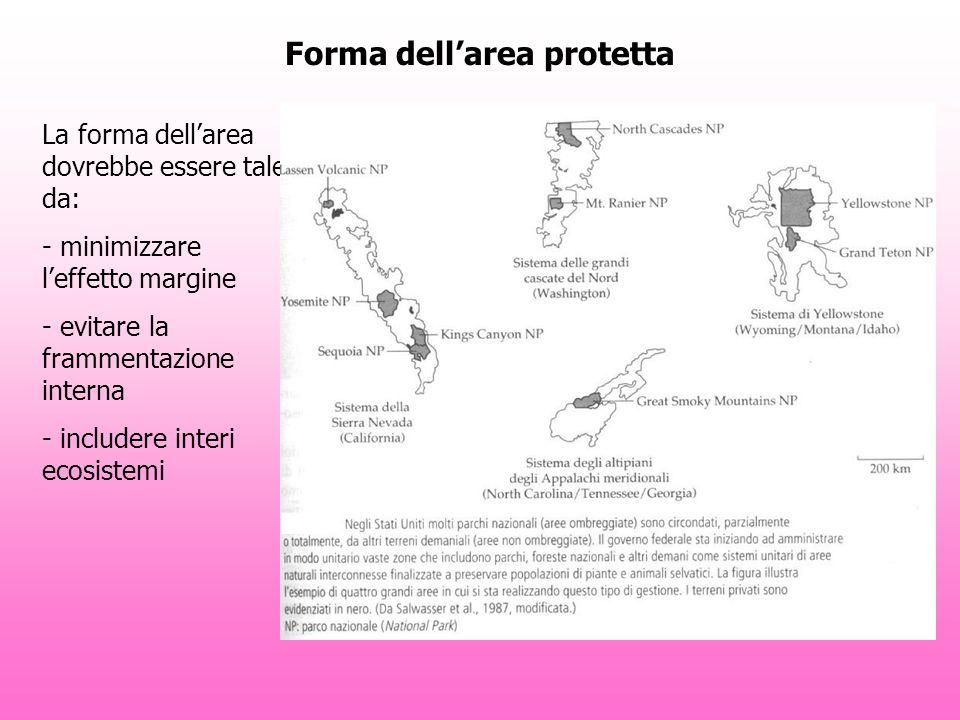 Forma dellarea protetta La forma dellarea dovrebbe essere tale da: - minimizzare leffetto margine - evitare la frammentazione interna - includere interi ecosistemi