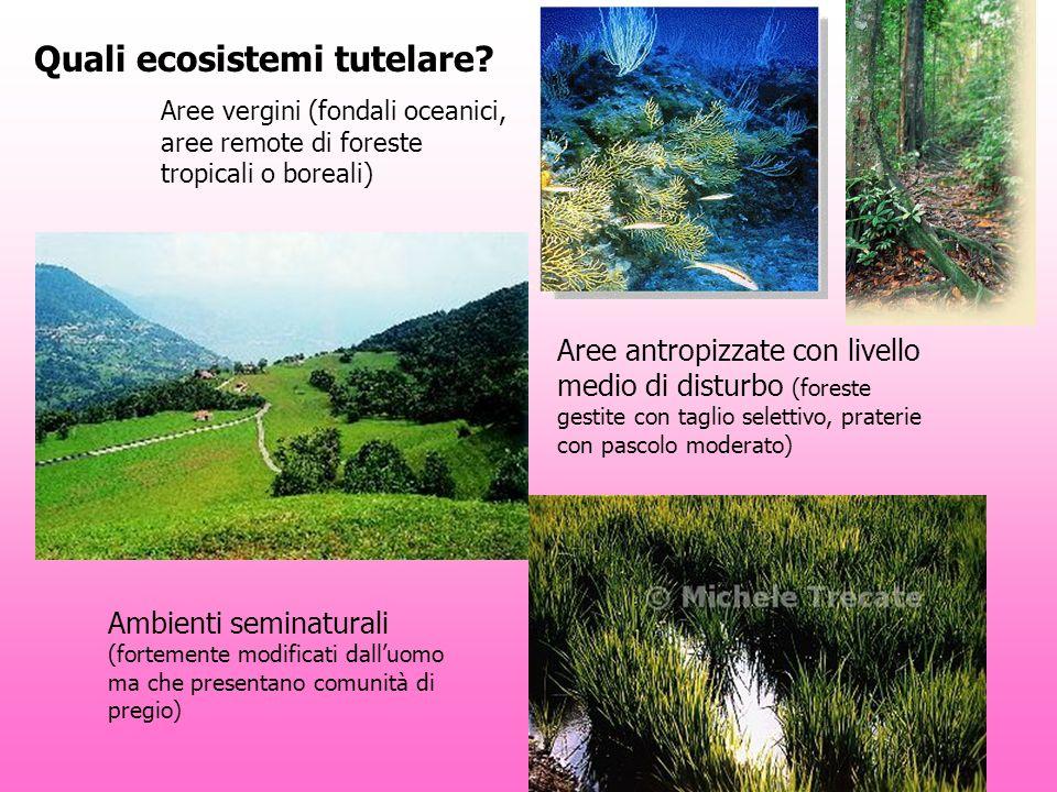 Quali ecosistemi tutelare? Aree vergini (fondali oceanici, aree remote di foreste tropicali o boreali) Aree antropizzate con livello medio di disturbo