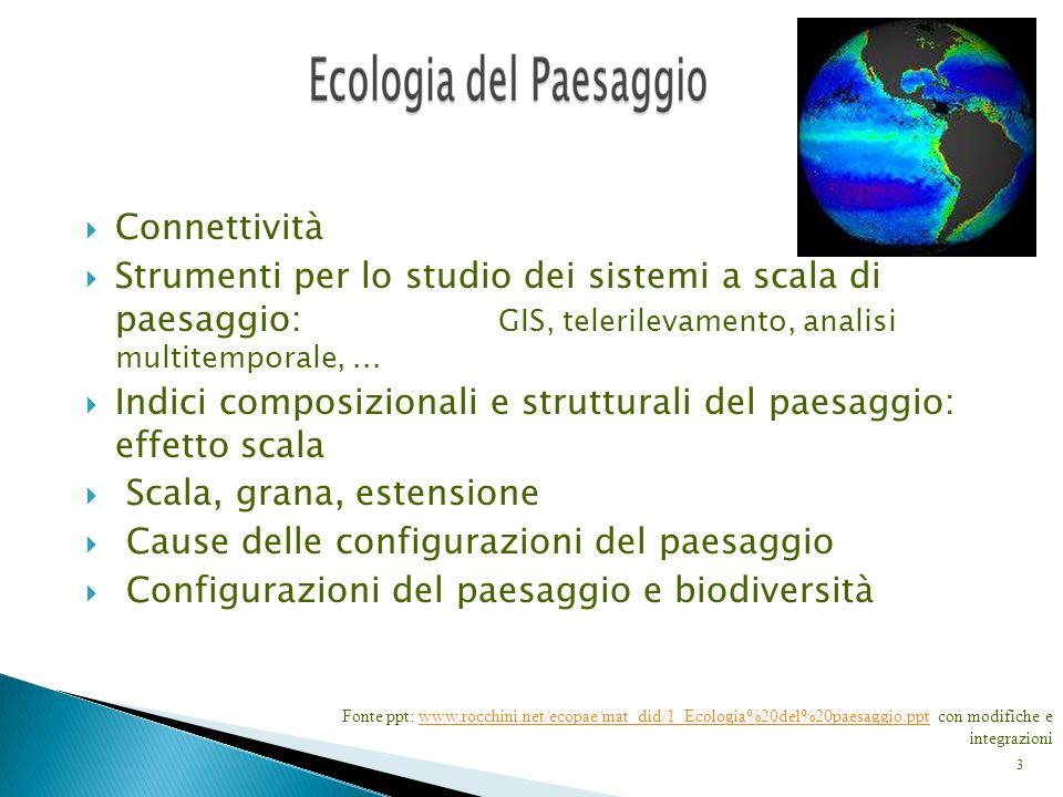 4 configurazioni (pattern) spazialiprocessi ecologici Cause e conseguenze delleterogeneità spaziale struttura funzione
