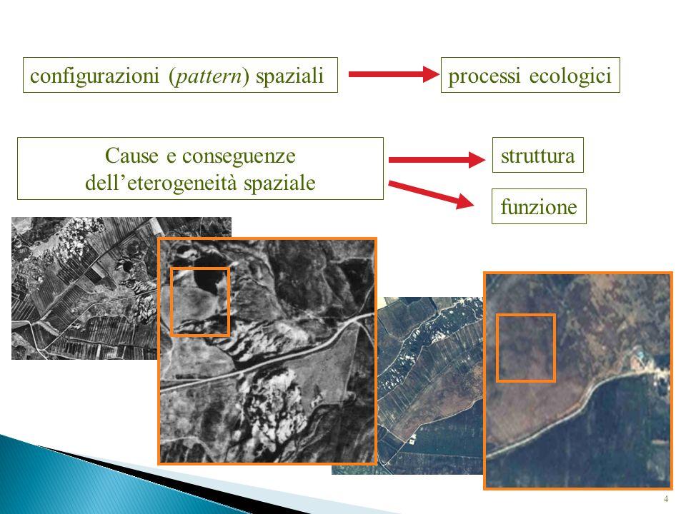 Uno degli assunti di base dell Ecologia del Paesaggio è l esistenza di una relazione biunivoca tra struttura e processi che definiscono i paesaggi: i processi caratterizzano la struttura, la quale a sua volta determina le trasformazioni fisiche del territorio L Ecologia del Paesaggio attribuisce un significato funzionale alle configurazioni spaziali degli ecosistemi, ovvero al disegno del paesaggio Corollario: ogni tipologia di paesaggio può essere riferita ad un modello (pattern) di base Tali pattern riguardano fondamentalmente gli aspetti strutturali, e possono assumere configurazioni semplici (patch o tessere, ecotopi, corridoi, matrici) o complesse (apparati, ecomosaici, tessuti) risorsenaturali.files.wordpress.com/2008/06/la-paglia-tav-7-patches-e-sistemi-source-e-sink2.jpg