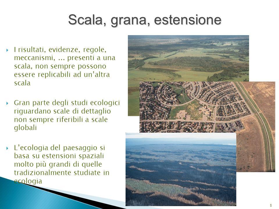 COMPONENTI DELLA SCALA SPAZIALE Grana Estensione 9