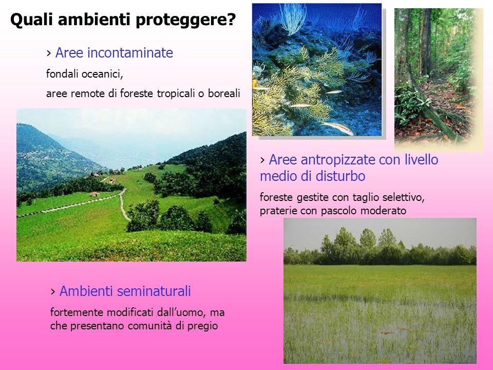 Quali ambienti proteggere? Aree incontaminate fondali oceanici, aree remote di foreste tropicali o boreali Aree antropizzate con livello medio di dist