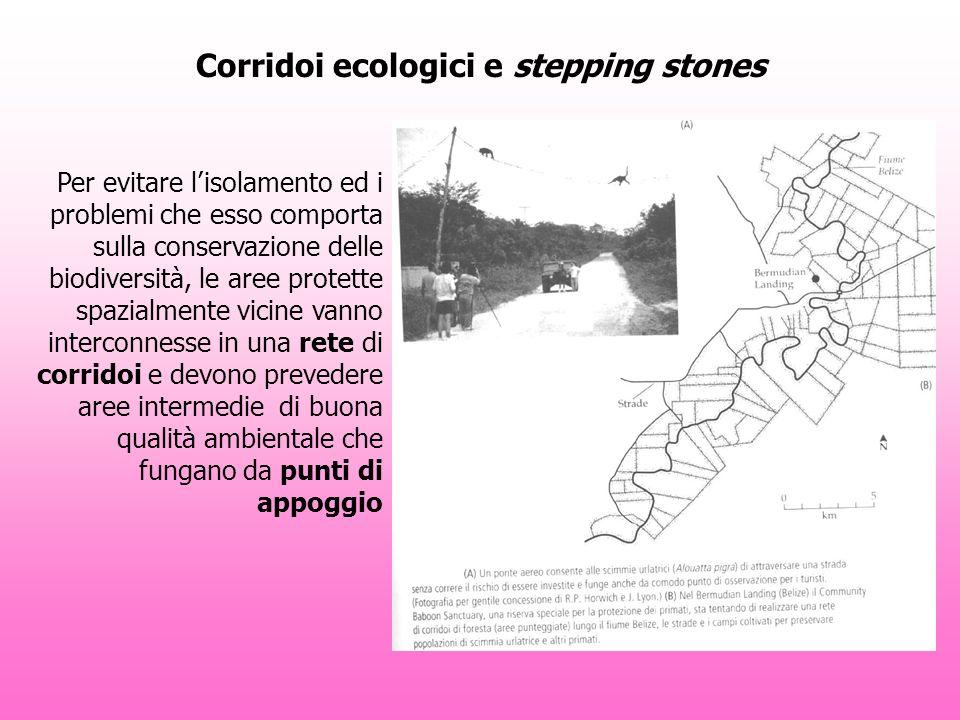 Corridoi ecologici e stepping stones Per evitare lisolamento ed i problemi che esso comporta sulla conservazione delle biodiversità, le aree protette spazialmente vicine vanno interconnesse in una rete di corridoi e devono prevedere aree intermedie di buona qualità ambientale che fungano da punti di appoggio