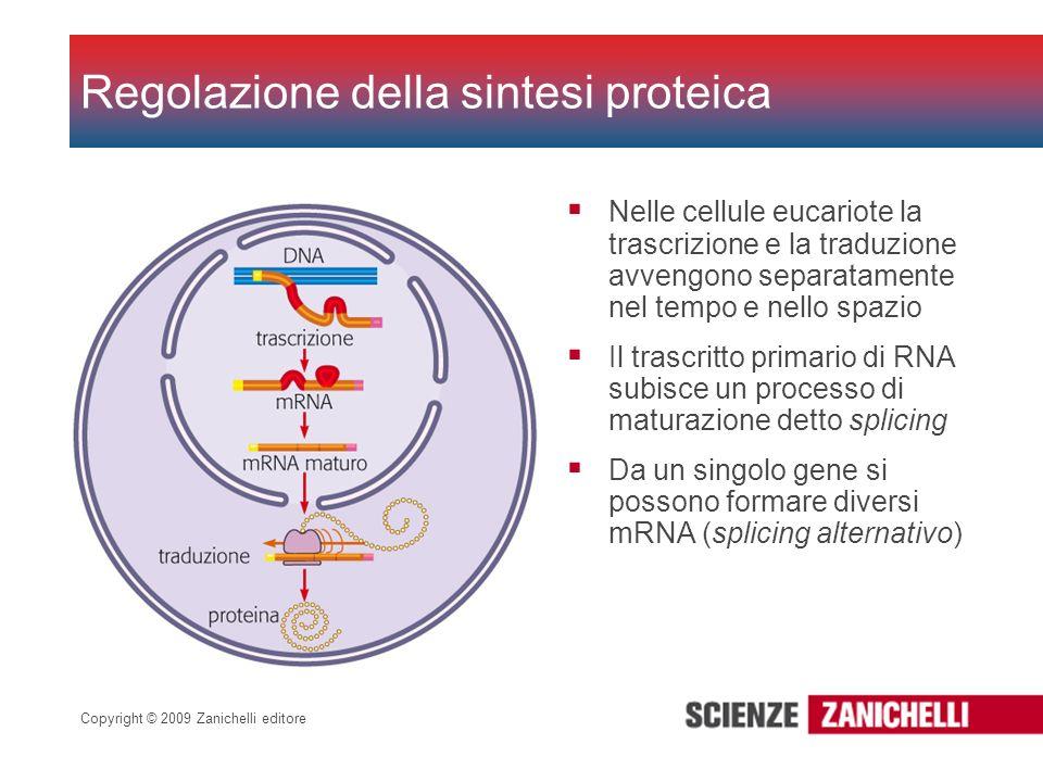 Copyright © 2009 Zanichelli editore Nelle cellule eucariote la trascrizione e la traduzione avvengono separatamente nel tempo e nello spazio Il trascr