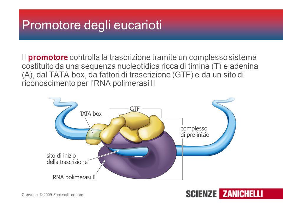 Copyright © 2009 Zanichelli editore Il promotore controlla la trascrizione tramite un complesso sistema costituito da una sequenza nucleotidica ricca