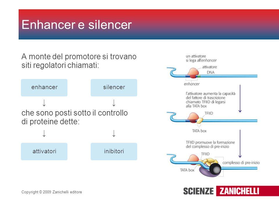 Copyright © 2009 Zanichelli editore A monte del promotore si trovano siti regolatori chiamati: Enhancer e silencer enhancersilencer che sono posti sot