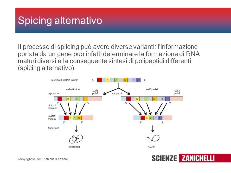 Copyright © 2009 Zanichelli editore Il processo di splicing può avere diverse varianti: linformazione portata da un gene può infatti determinare la fo