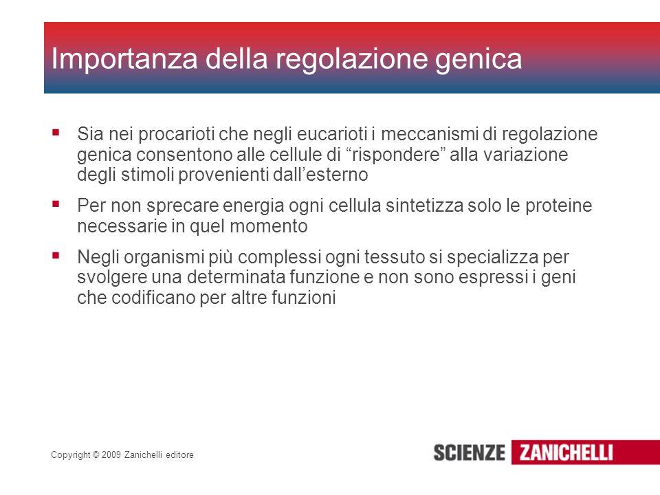 Copyright © 2009 Zanichelli editore Sia nei procarioti che negli eucarioti i meccanismi di regolazione genica consentono alle cellule di rispondere al