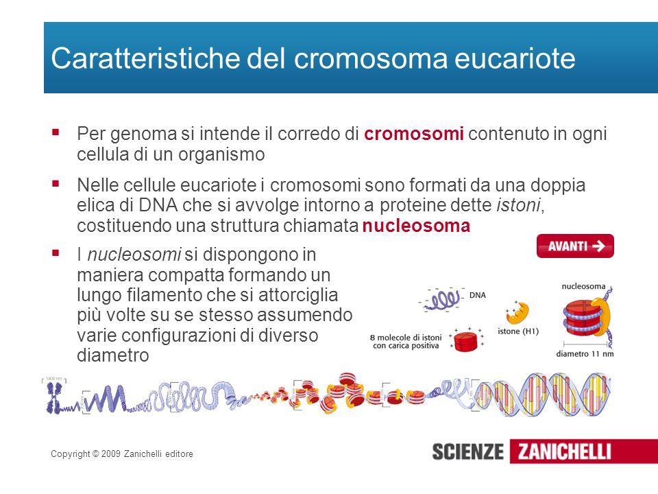 Copyright © 2009 Zanichelli editore Caratteristiche del cromosoma eucariote Per genoma si intende il corredo di cromosomi contenuto in ogni cellula di