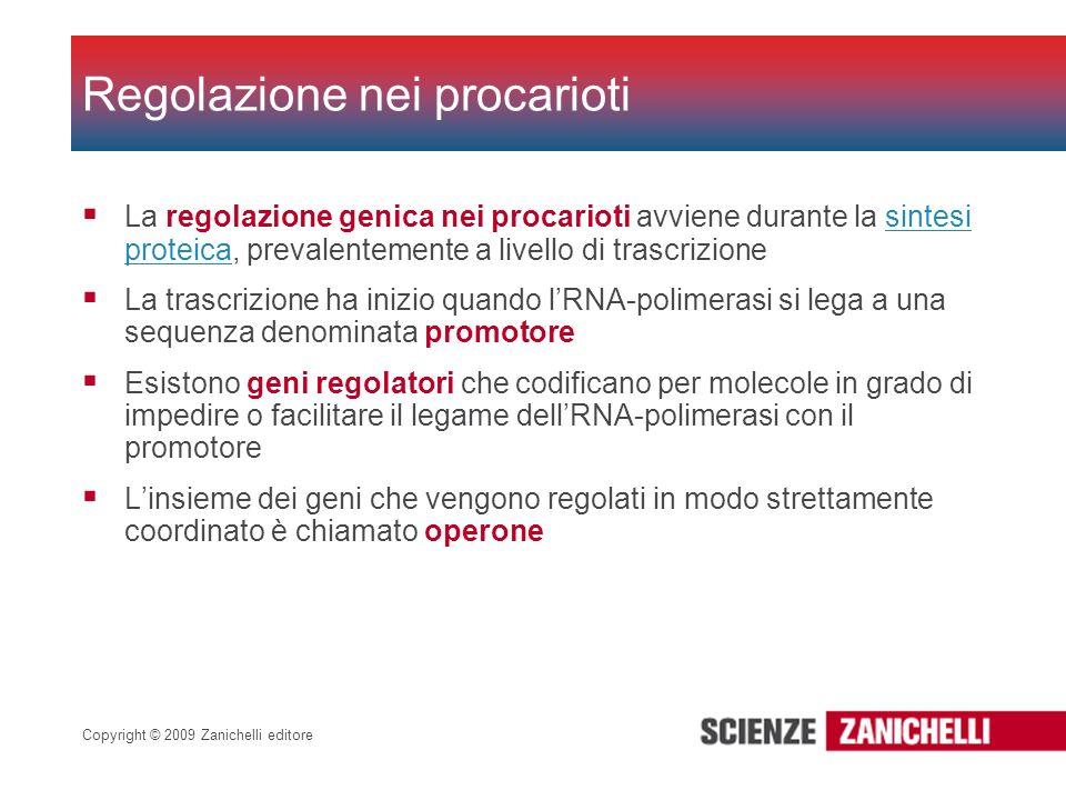 Copyright © 2009 Zanichelli editore La regolazione genica nei procarioti avviene durante la sintesi proteica, prevalentemente a livello di trascrizion