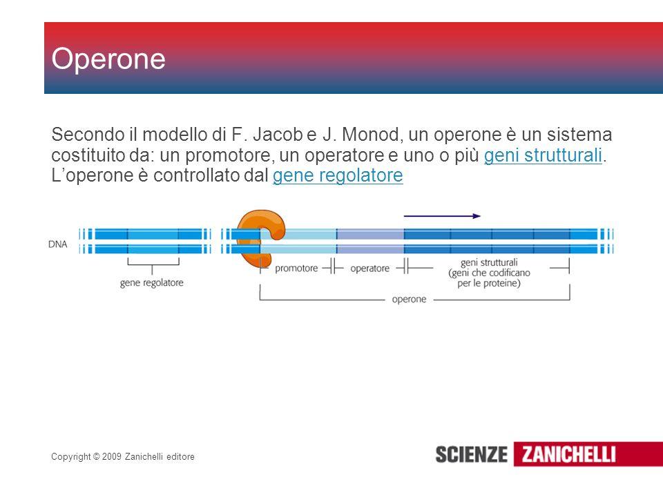 Copyright © 2009 Zanichelli editore Secondo il modello di F. Jacob e J. Monod, un operone è un sistema costituito da: un promotore, un operatore e uno