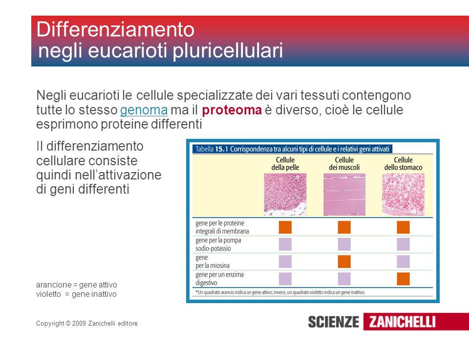 Copyright © 2009 Zanichelli editore Negli eucarioti le cellule specializzate dei vari tessuti contengono tutte lo stesso genoma ma il proteoma è diver