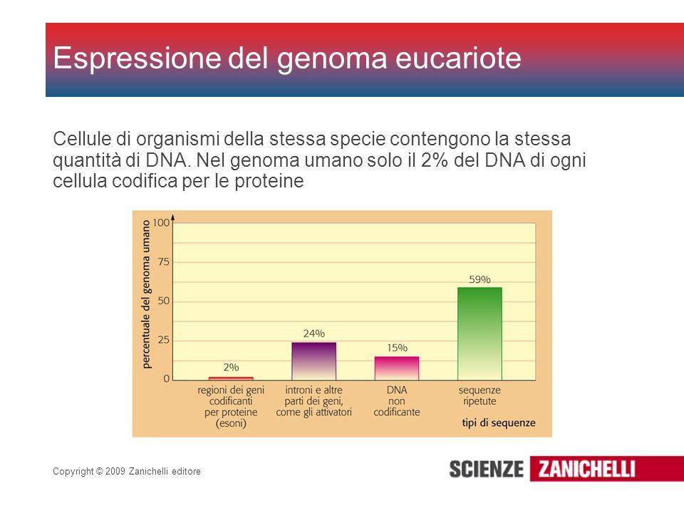 Copyright © 2009 Zanichelli editore Cellule di organismi della stessa specie contengono la stessa quantità di DNA. Nel genoma umano solo il 2% del DNA