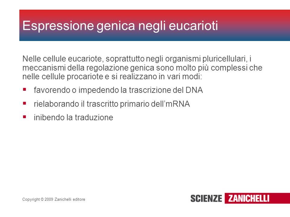 Copyright © 2009 Zanichelli editore Nelle cellule eucariote, soprattutto negli organismi pluricellulari, i meccanismi della regolazione genica sono mo