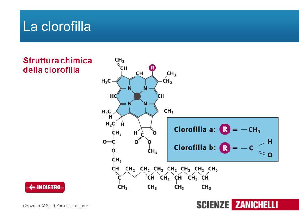 Copyright © 2009 Zanichelli editore La clorofilla Struttura chimica della clorofilla