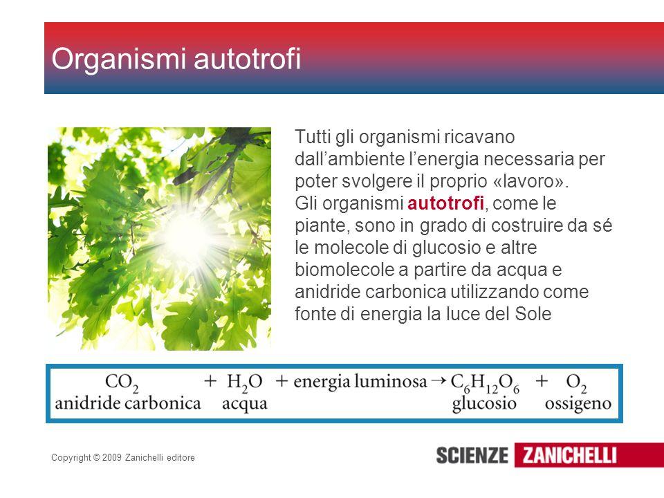 Copyright © 2009 Zanichelli editore Organismi autotrofi Tutti gli organismi ricavano dallambiente lenergia necessaria per poter svolgere il proprio «l
