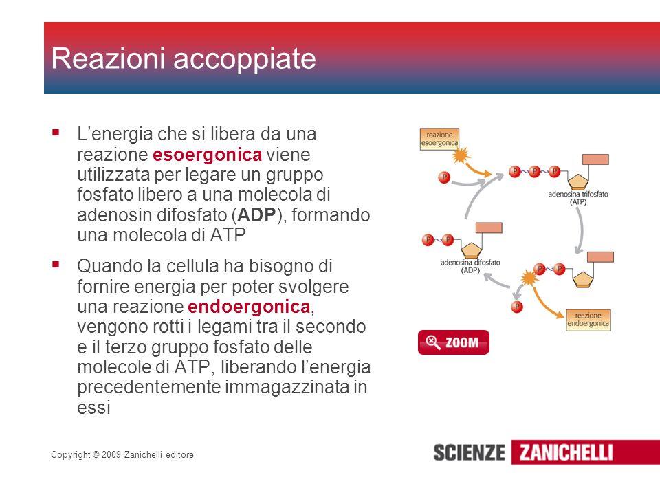 Copyright © 2009 Zanichelli editore Lenergia che si libera da una reazione esoergonica viene utilizzata per legare un gruppo fosfato libero a una mole