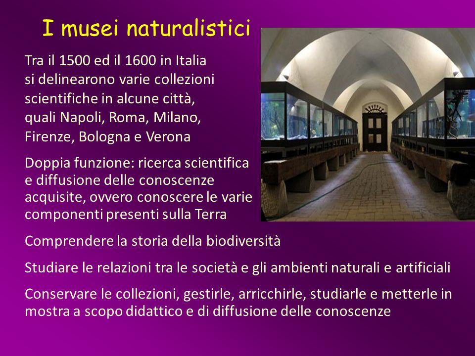 I musei naturalistici Tra il 1500 ed il 1600 in Italia si delinearono varie collezioni scientifiche in alcune città, quali Napoli, Roma, Milano, Firen