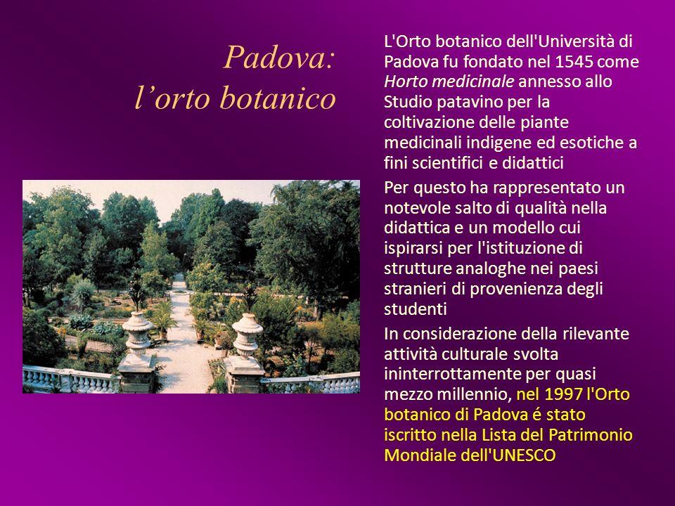 Padova: lorto botanico L'Orto botanico dell'Università di Padova fu fondato nel 1545 come Horto medicinale annesso allo Studio patavino per la coltiva