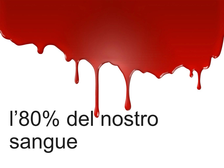 l80% del nostro sangue