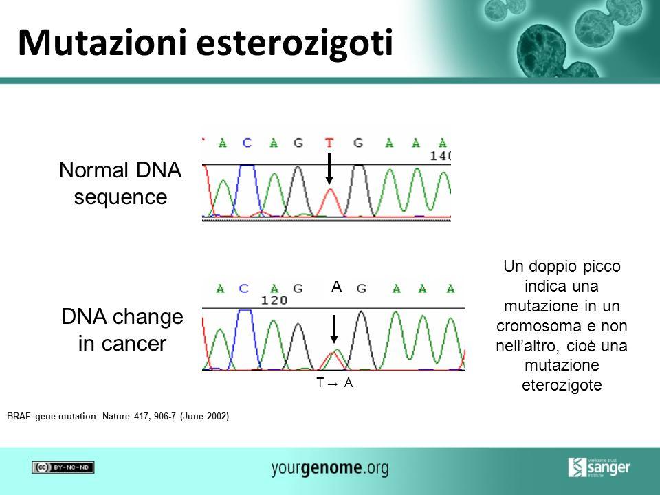 Mutazioni esterozigoti DNA change in cancer Normal DNA sequence BRAF gene mutation Nature 417, 906-7 (June 2002) Un doppio picco indica una mutazione