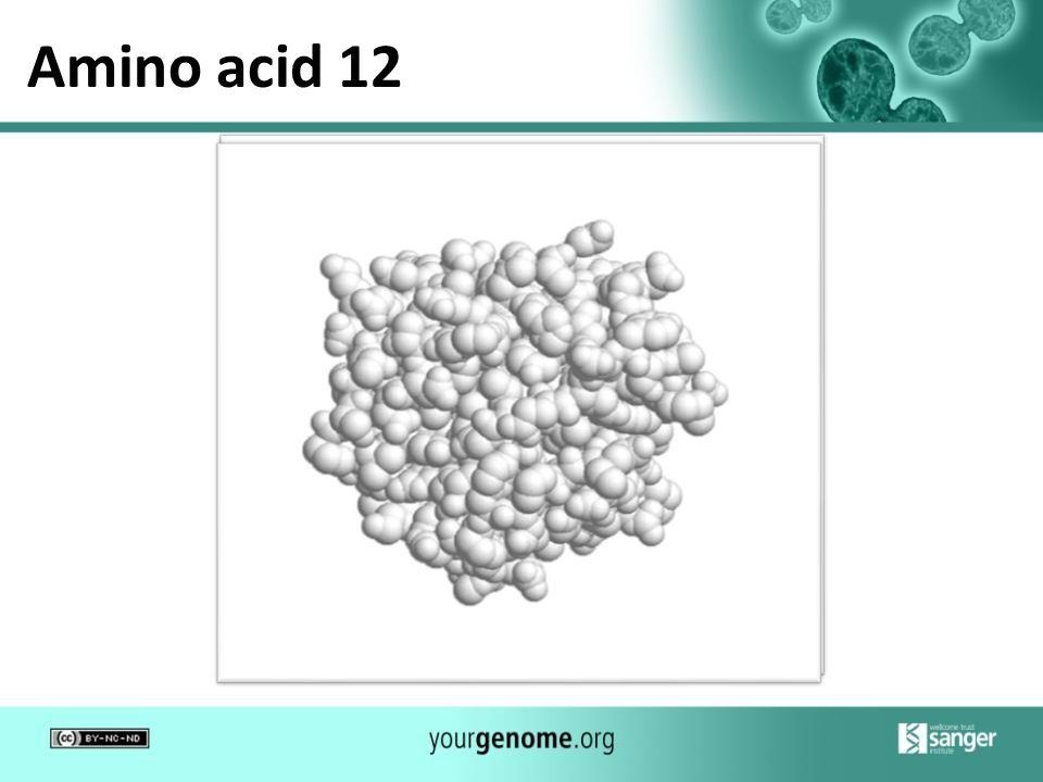 Amino acid 12