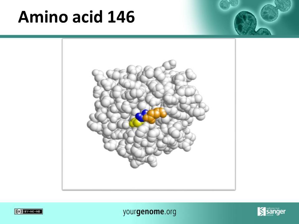 Amino acid 146