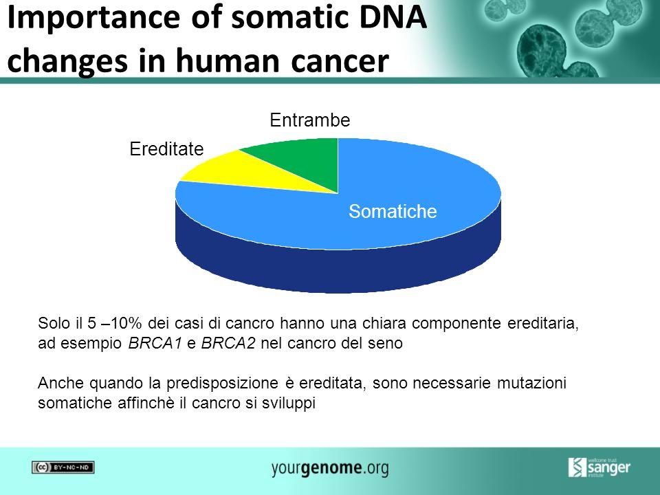 Importance of somatic DNA changes in human cancer Somatiche Ereditate Entrambe Solo il 5 –10% dei casi di cancro hanno una chiara componente ereditari
