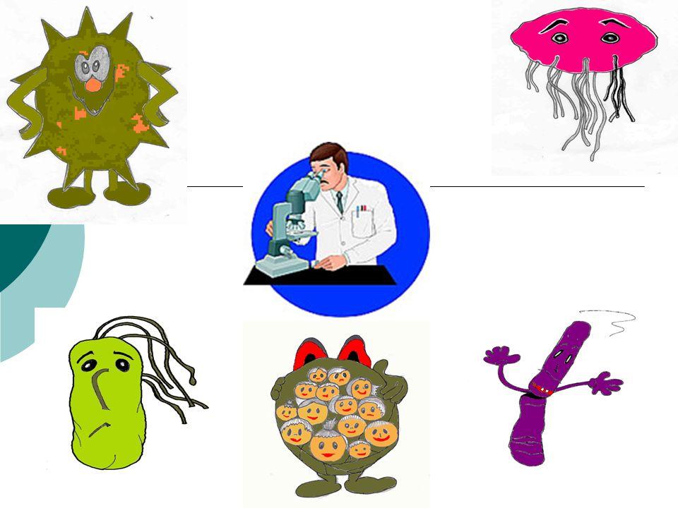 Cosa sono i batteri .I batteri sono organismi unicellulari, procarioti, presenti dappertutto.