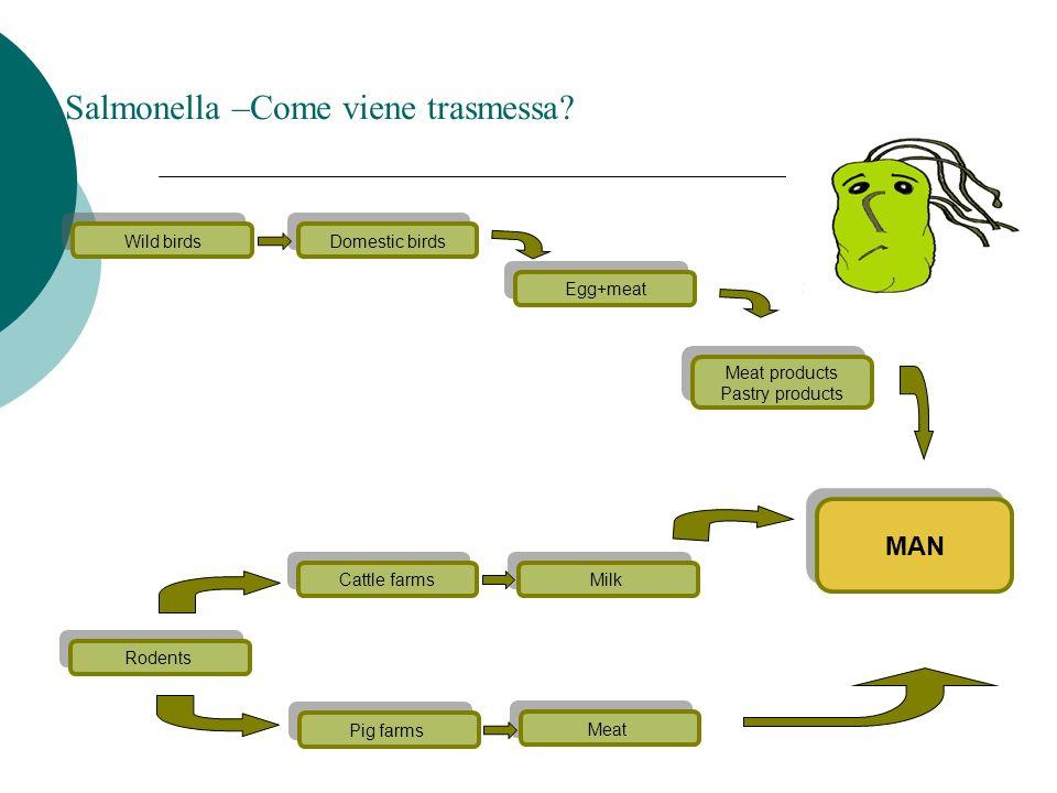 Il ciclo vitale della Trichinella