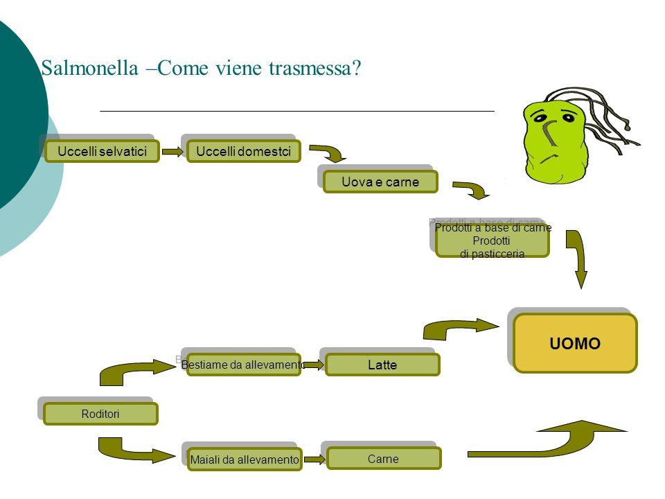 Maneggio scorretto Clostridium perfringens - Come viene trasmesso.