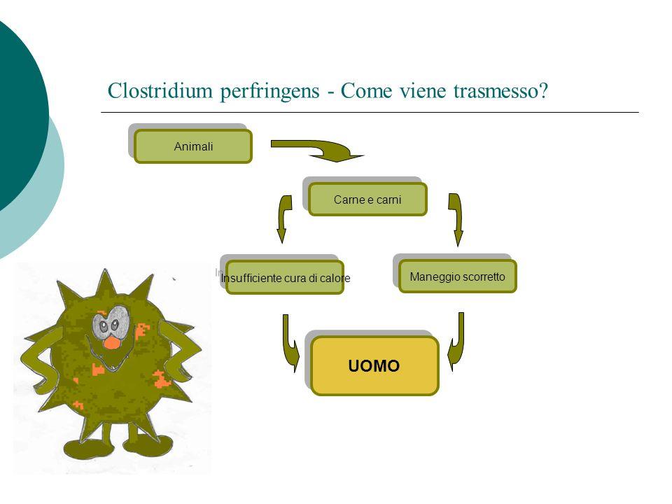 Maneggio scorretto Clostridium perfringens - Come viene trasmesso? UOMO Animali Carne e carni Insufficiente cura di calore