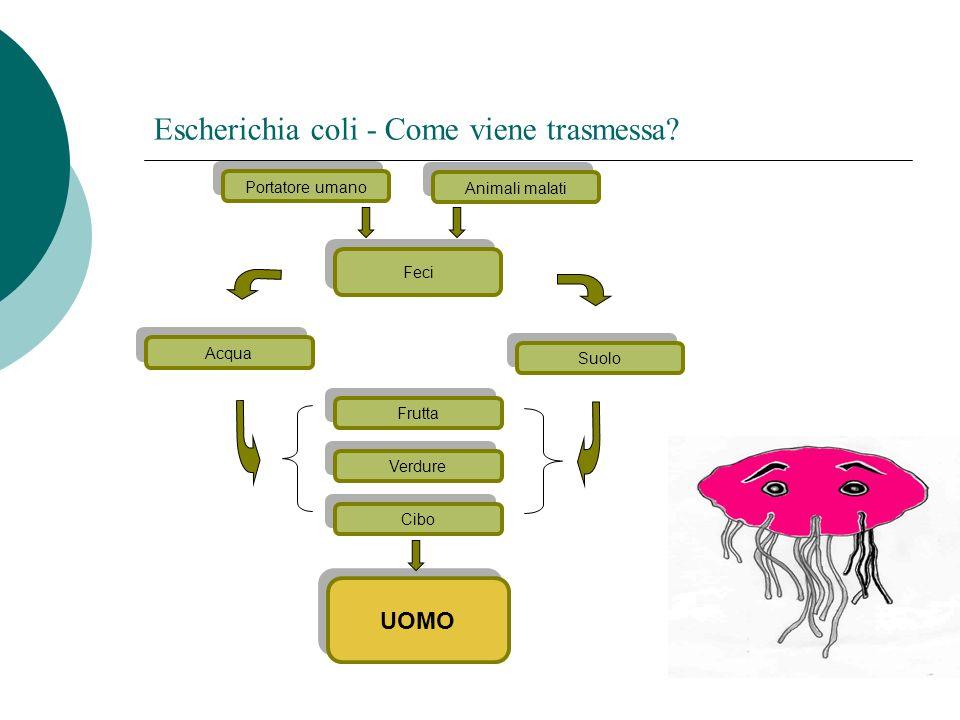 Escherichia coli - Come viene trasmessa? Portatore umano UOMO Animali malati Acqua Feci Suolo Verdure Frutta Cibo