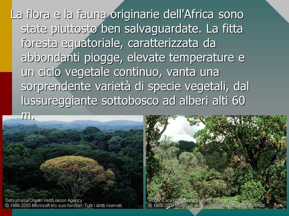 La flora e la fauna originarie dell'Africa sono state piuttosto ben salvaguardate. La fitta foresta equatoriale, caratterizzata da abbondanti piogge,