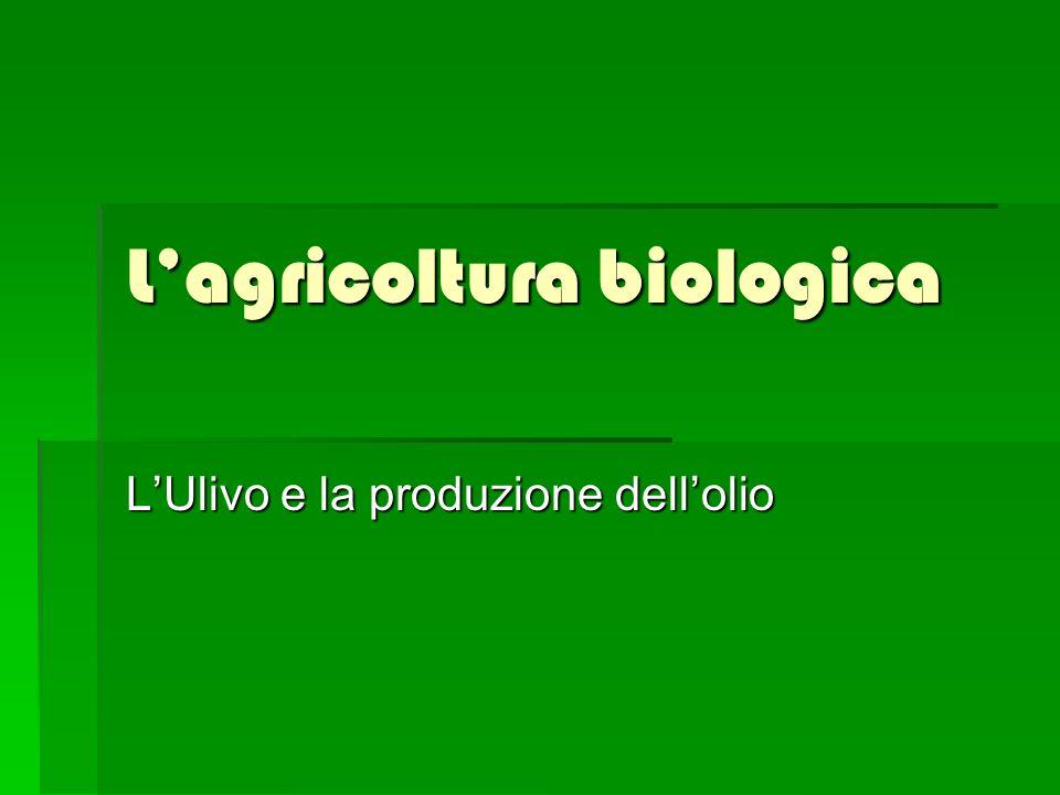 L olivo o ulivo è una pianta da frutto.