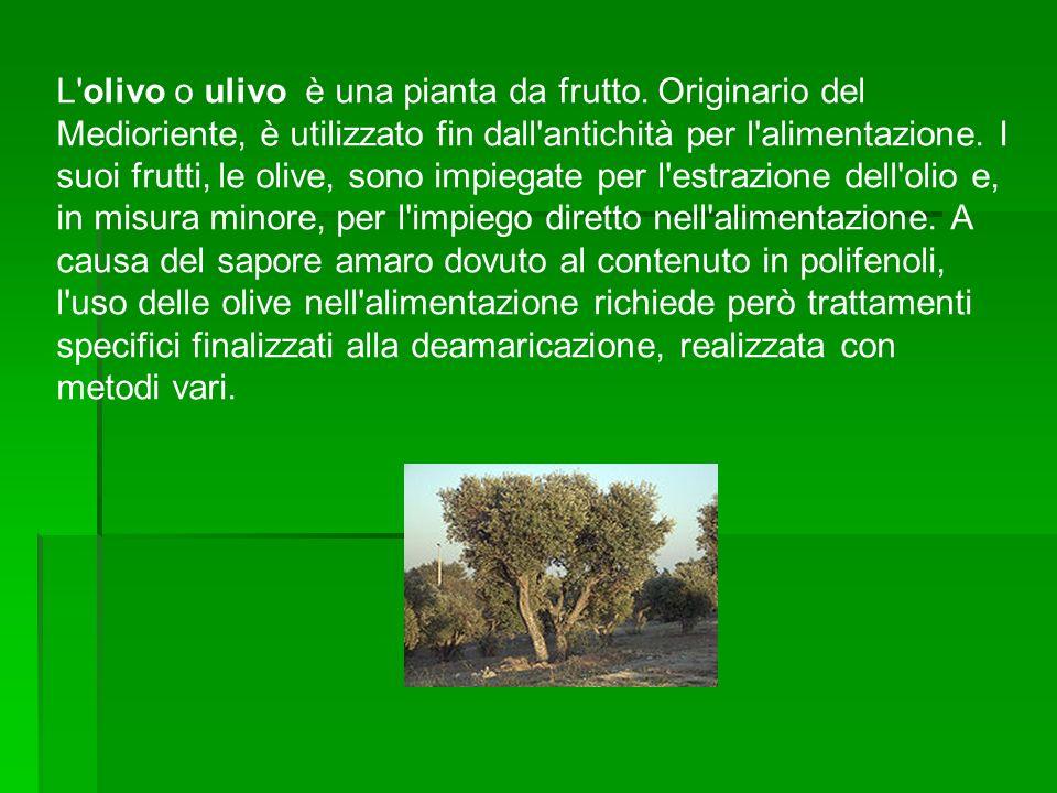 Olivi in Puglia Olivo secolare in Puglia Olivi secolari in Calabria Oliveto collinare in Toscana
