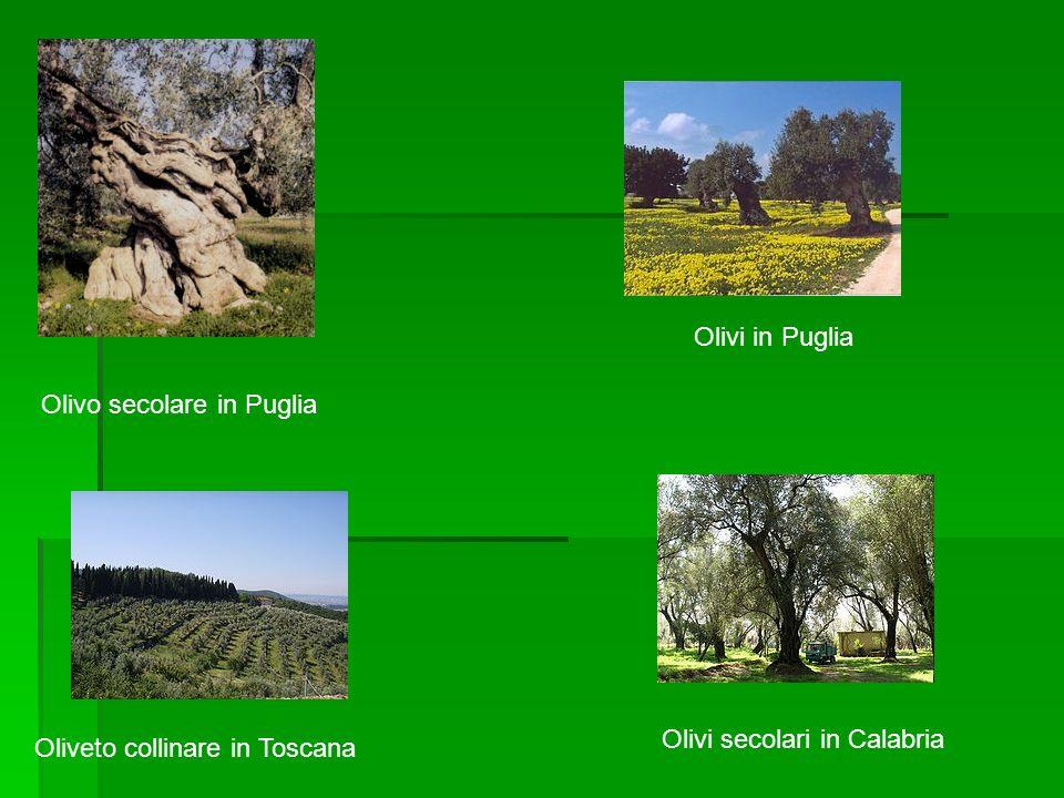 Principali paesi produttori Anno 2006 Produzione (in tonnellate) Superficie coltivata (in ettari) Rendimento (q/Ha) Mondo 17 317 089 8 597 064 20,1 1.