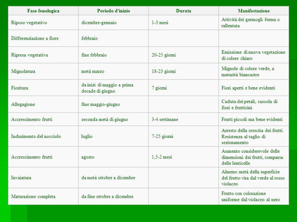 Irrigazione L olivo è una pianta che ha poca esigenza di acqua, ma carenze idriche prolungate possono provocare gravi danni alle piante di olivo come cascola e bassa produzione.