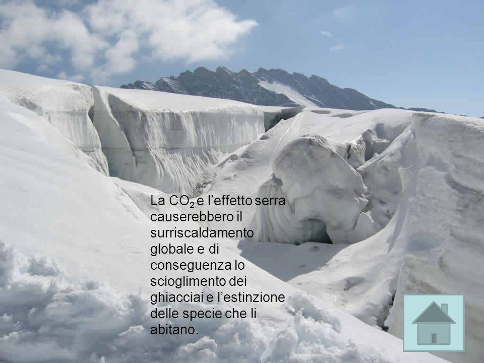 La CO 2 e leffetto serra causerebbero il surriscaldamento globale e di conseguenza lo scioglimento dei ghiacciai e lestinzione delle specie che li abitano.