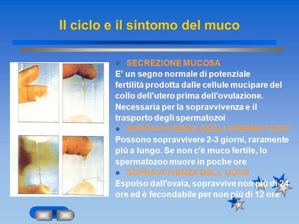 Il ciclo e il sintomo del muco SECREZIONE MUCOSA E un segno normale di potenziale fertilità prodotta dalle cellule mucipare del collo dell'utero prima