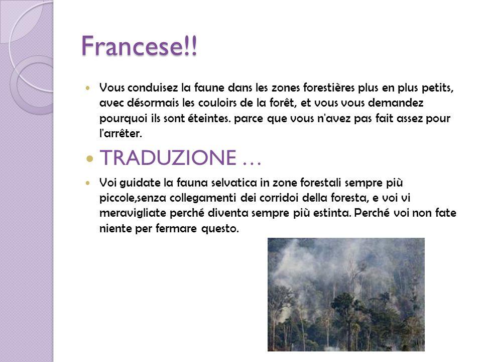 Francese!! Vous conduisez la faune dans les zones forestières plus en plus petits, avec désormais les couloirs de la forêt, et vous vous demandez pour