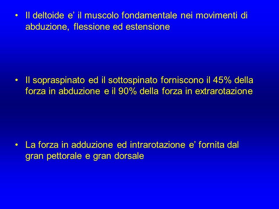 Il deltoide e il muscolo fondamentale nei movimenti di abduzione, flessione ed estensione Il sopraspinato ed il sottospinato forniscono il 45% della f