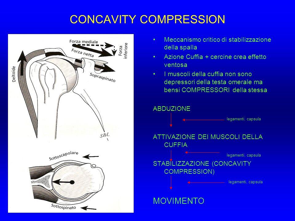 CONCAVITY COMPRESSION Meccanismo critico di stabilizzazione della spalla Azione Cuffia + cercine crea effetto ventosa I muscoli della cuffia non sono