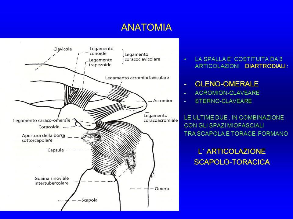 STRUTTURE CAPSULO-LEGAMENTOSE TB: Tendine del bicipite fuso con il cercine glenoideo (la cosidetta Ancora bicipitale correlata con le SLAP LESION) LGOS: Legamento gleno-omerale superiore LGOM: Legamento gleno-omerale medio CLGOI – AB: Complesso legamentoso gleno-omerale inferiore-banda anteriore CLGOI – BP: Complesso legamentoso gleno-omerale inferiore-banda posteriore RA: Recesso ascellare CP: Capsula posteriore