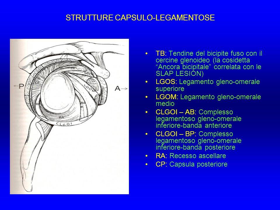 STRUTTURE CAPSULO-LEGAMENTOSE TB: Tendine del bicipite fuso con il cercine glenoideo (la cosidetta Ancora bicipitale correlata con le SLAP LESION) LGO