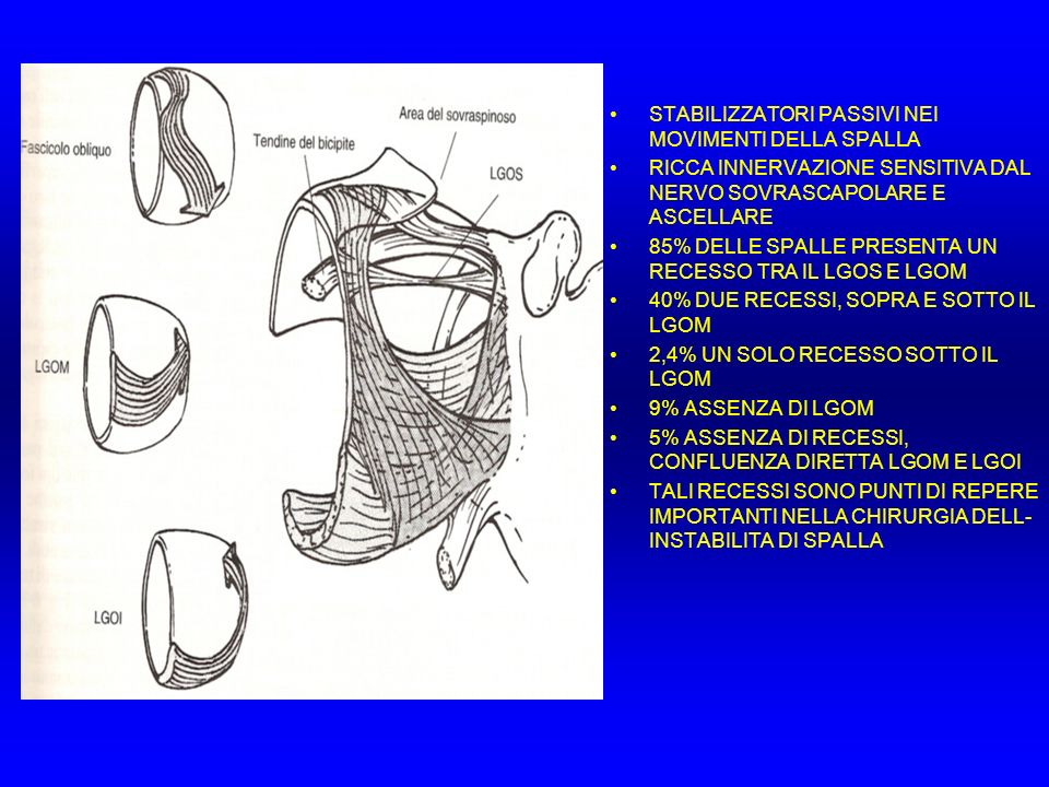 BILANCIAMENTO MUSCOLARE Nella spalla non esiste un asse fisso di movimento In una determinata posizione, l attivazione di un muscolo crea una serie unica di momenti rotazionali Se si vuole eseguire un flessione pura (senza rotazioni) I momenti di adduzione e intrarotazione devono essere neutralizzati da altri muscoli come il deltoide posteriore ed il sottospinato Se il gran dorsale deve eseguire una intrarotazione pura, il suo momento di adduzione deve essere neutralizzato dal deltoide, sotto e sovraspinato Se il gran dorsale deve eseguire una adduzione, il suo momento di intrarotazione deve essere neutralizzato dal sottospinoso, piccolo rotondo e deltoide posteriore