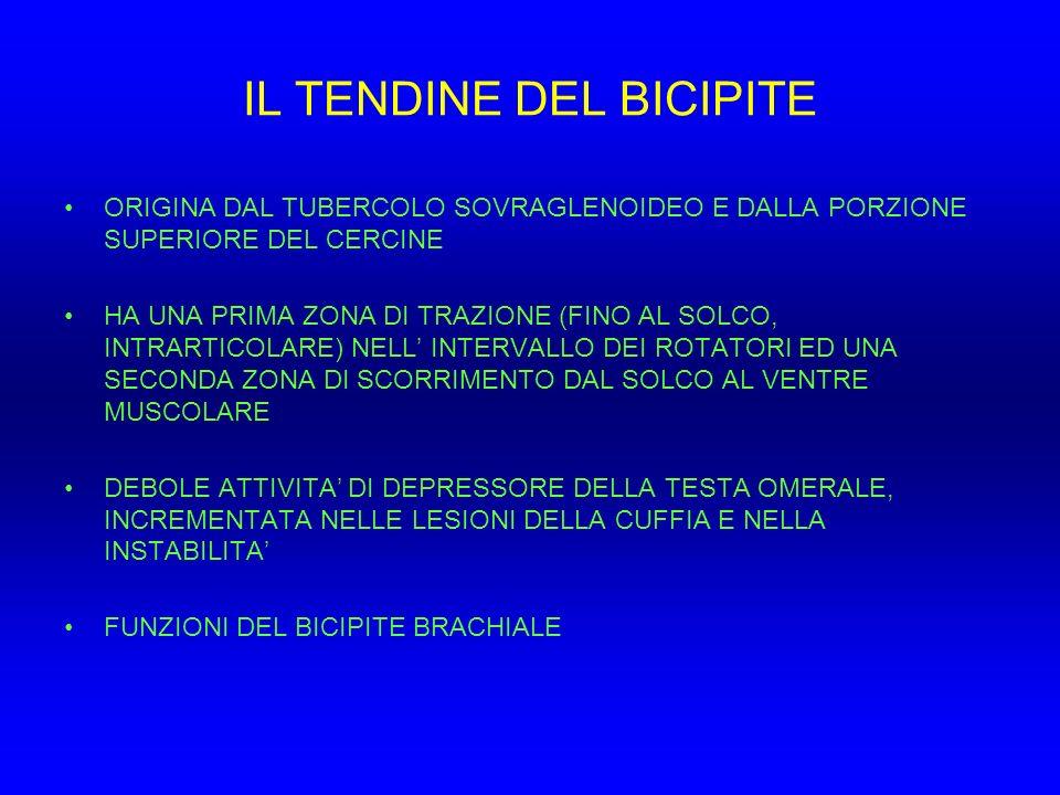 IL TENDINE DEL BICIPITE ORIGINA DAL TUBERCOLO SOVRAGLENOIDEO E DALLA PORZIONE SUPERIORE DEL CERCINE HA UNA PRIMA ZONA DI TRAZIONE (FINO AL SOLCO, INTR